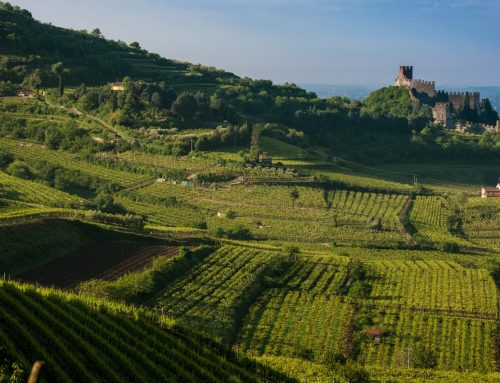 Soave at the third International Conference on Terraced Landscapes