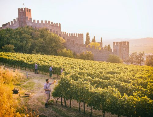 Soave turns 50 but looks ahead to its centennial