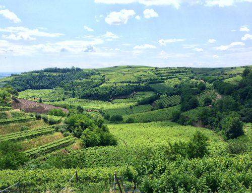 Vinitaly: Soave, a slow revolution
