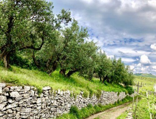 Da paesaggio a patrimonio: il percorso virtuoso del Soave