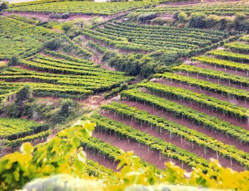 Con il registro delle vigne si chiude un anno di grandi cambiamenti nel Soave
